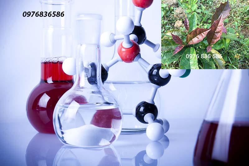 Thành phần hóa học cây xạ đen